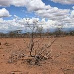 paisaje asolado por la sequía en Kenia